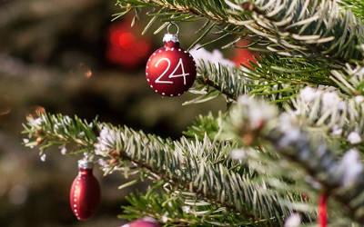 MRC Marguerite D'Youville: collecte des arbres de Noël naturels