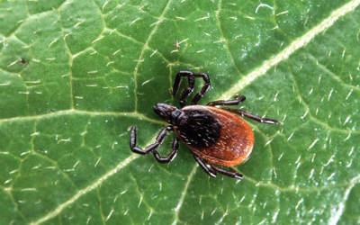 Un nouveau service en Montérégie pour prévenir la maladie de Lyme