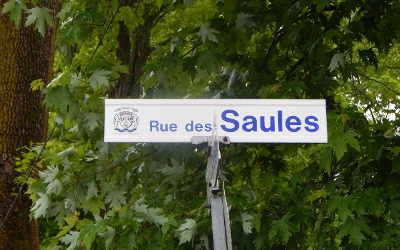 Chronique toponymique: la rue des Saules