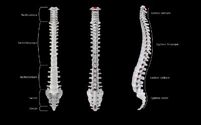 Chronique KinéCible: les avantages d'une bonne posture