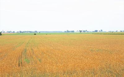 Le mois d'août à Contrecœur: des kilomètres de champs dorés