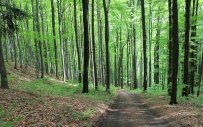 Saint-Antoine-sur-Richelieu: le 1er juin, posons un geste commun pour l'environnement en plantant un arbre